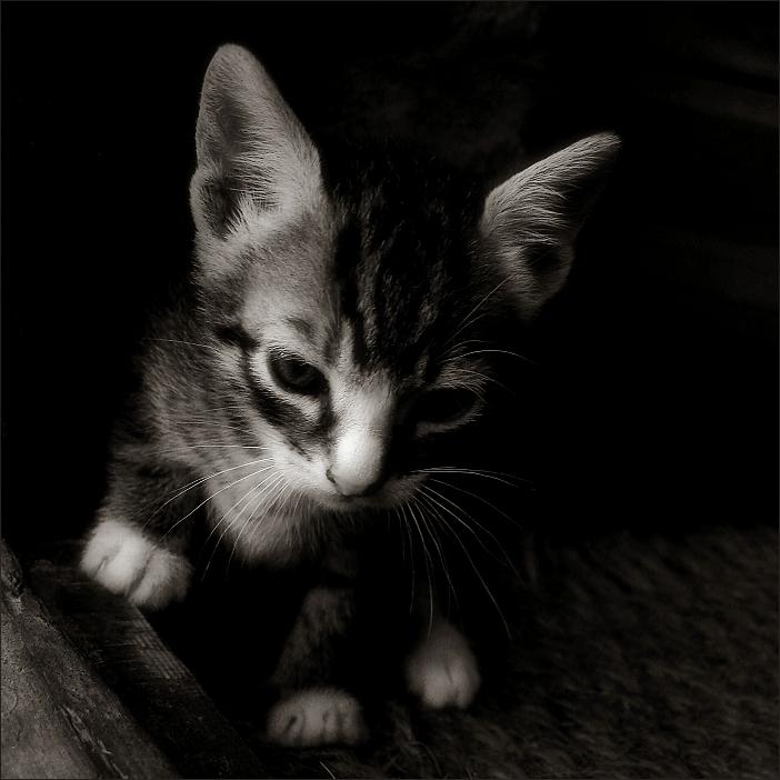 gat / cat