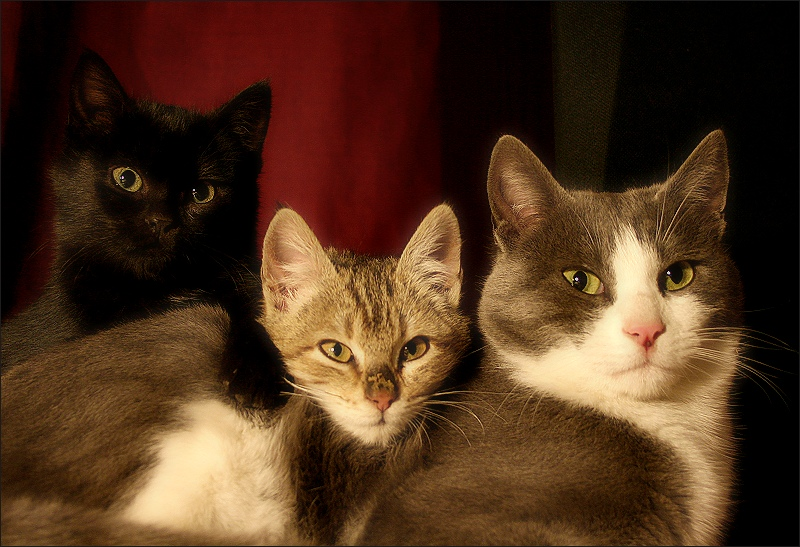 three cats / tres gats