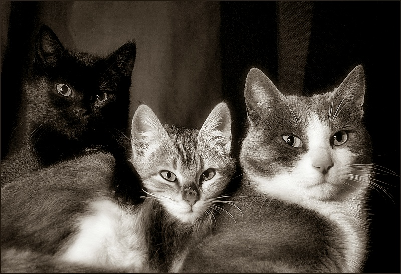 Three cats tres gats black white or color The three cats