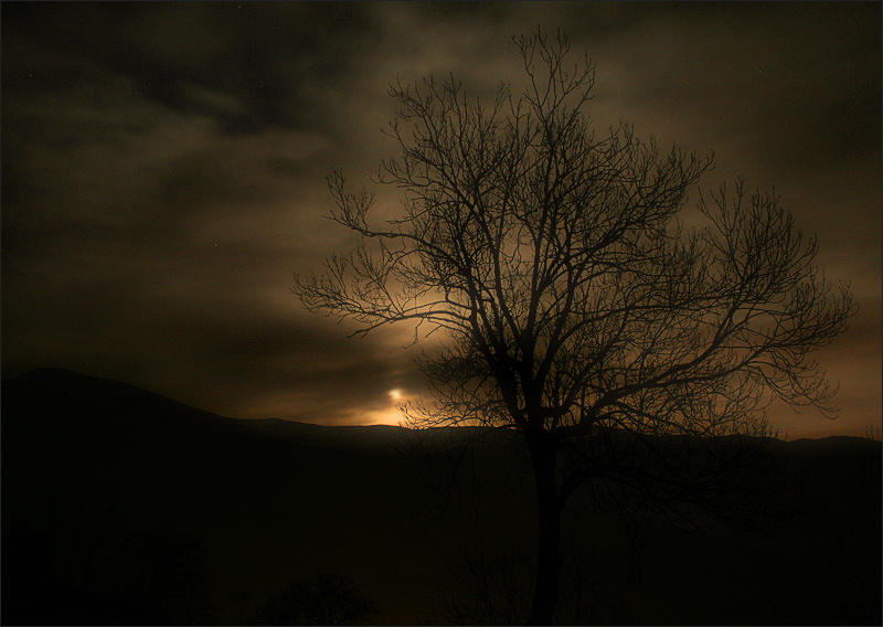 tree at moonlight / a la llum de la lluna