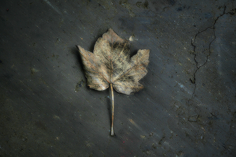 Fulla de tardor / hoja de otoo / autumn leaf
