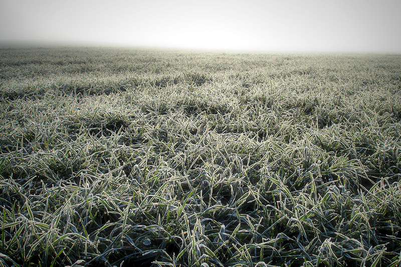 frozen fields / camps gebrats