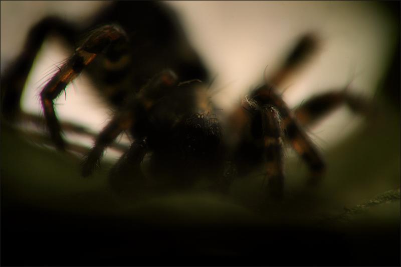Arachnid - II