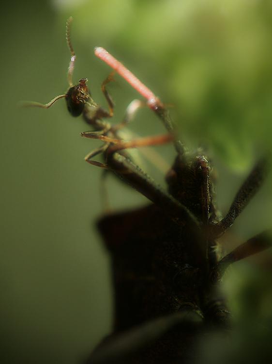 La formiga cabrona i mr. Bug