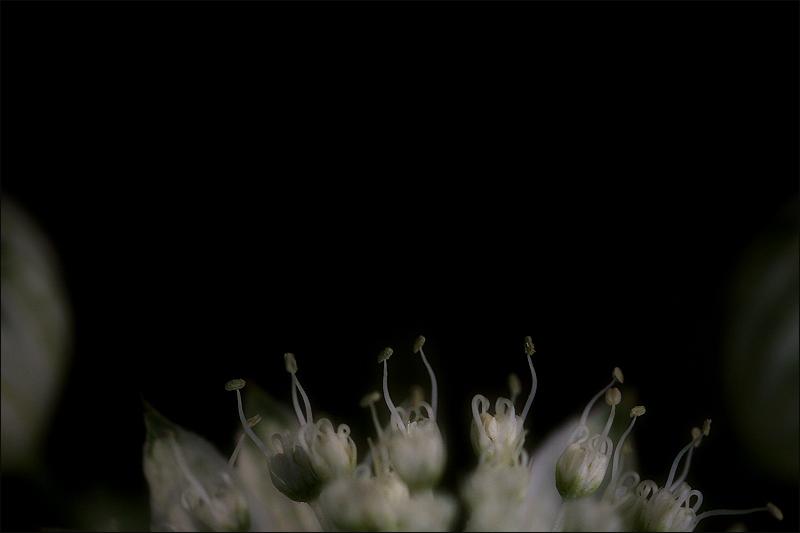 música i dansa a l'interior d'una flor