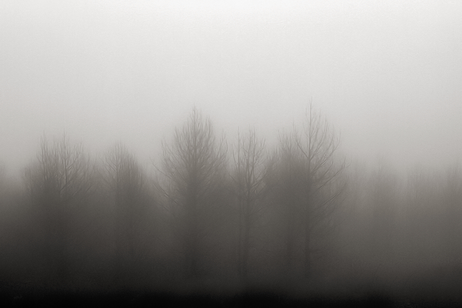 a mist that does not let us see the forest / una boira que no ens deixa veure el bosc
