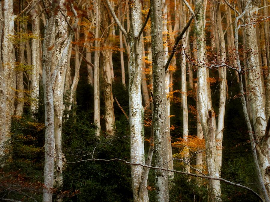 Autumn's structures / estructures de la tardor
