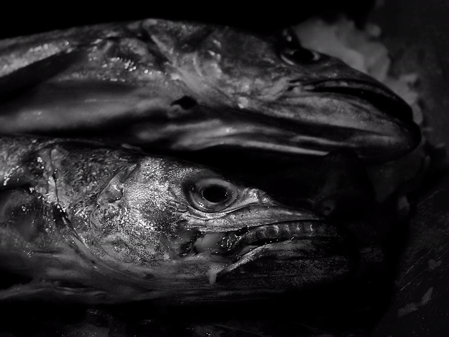 fish on ice / peix sobre gel