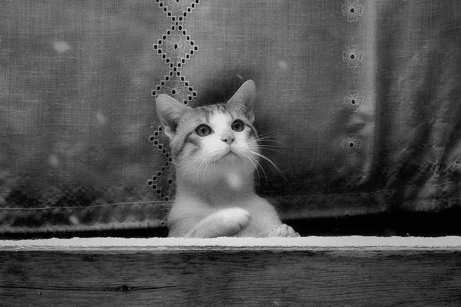 Kitten behind a window trying to hunt specks of snow on the other side of the glass without leaving home because it's too cold for him / Gatet darrera d'una finestra intentant la caça de volves de neu de l'altre banda del vidre sense sortir de casa doncs fa massa fred per ell
