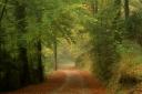 early autumn / principis de tardor