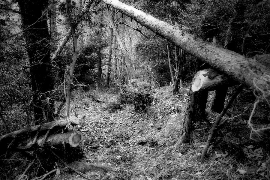 the forest path / el camí del bosc