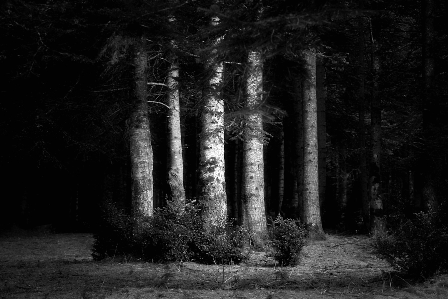 the trees / els arbres