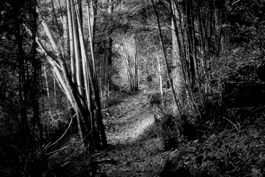 the forest path / el camí del bosc impenetrable