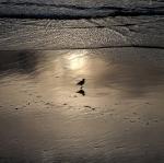 the beach / la platja