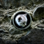 Cat hole (the wall - II)