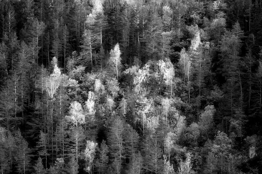 forest rocks / les roques del bosc
