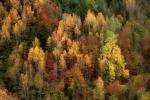 the advent of autumn / l'arribada de la tardor