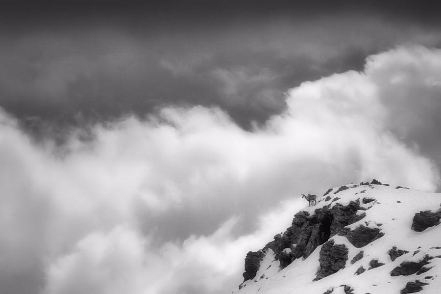 inhabitants of the clouds / els habitants dels núvols