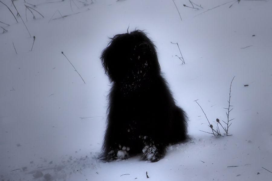 Torb, the dog
