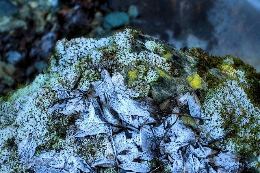 images from frozen world / imatges del mon congelat