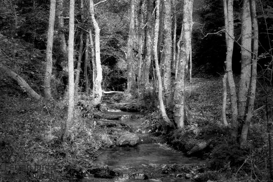 a river in autumn / un riu a la tardor
