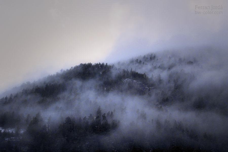 fog in the woods / boira als boscos