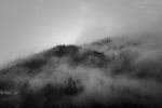 fog in the woods / boira als boscos