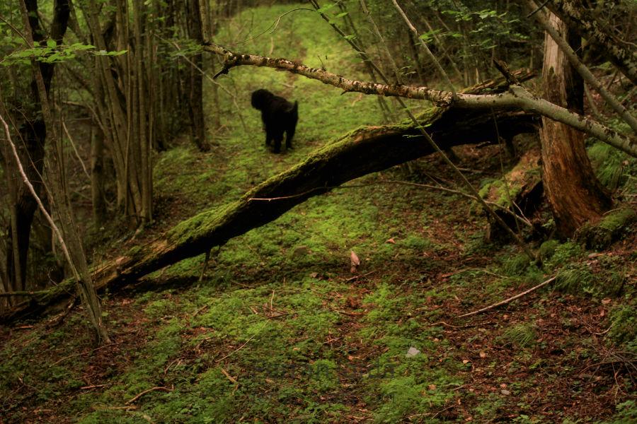 the dog's paths / els camins del gos