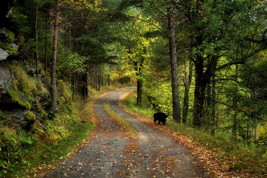 autumn walk / passeig de tardor