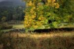 autumn countryside landscape / paisatge de camp a la tardor