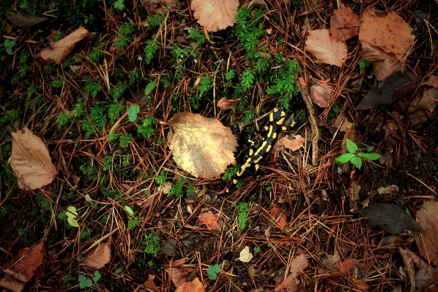 el passeig de la salamandra