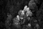 autumn paintings / pintures de tardor - V