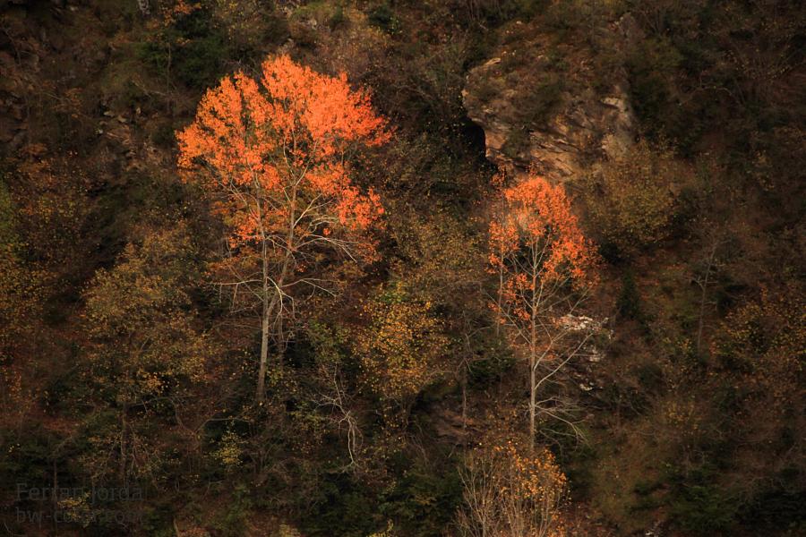 autumn paintings / pintures de tardor