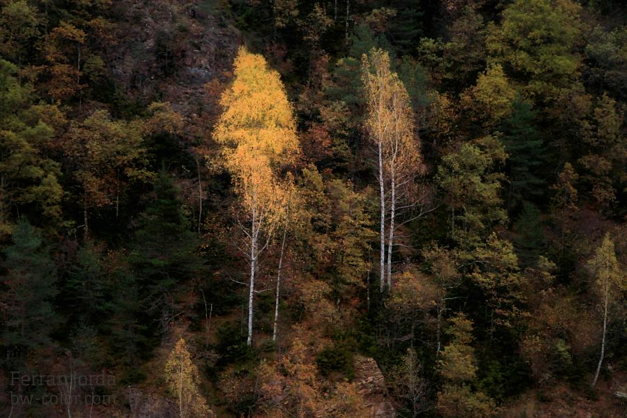 autumn paintings / pintures de tardor - II