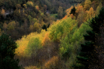 autumn paintings / pintures de tardor - IV