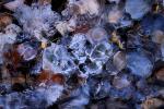 pearls of the frozen ground / les perles del terra glaçat