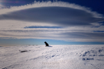 gos, neu i núvol.