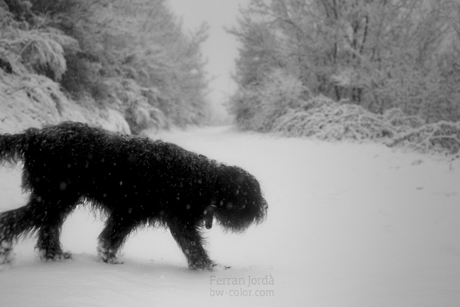 winter walk / passeig d'hivern