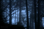 fog in the forest / la boira al bosc