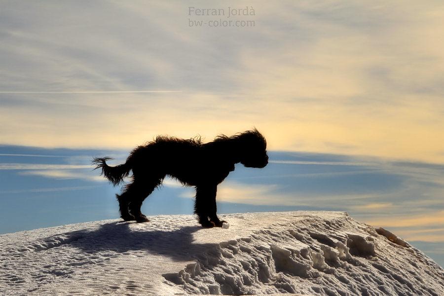 dog at the top / gos al cim