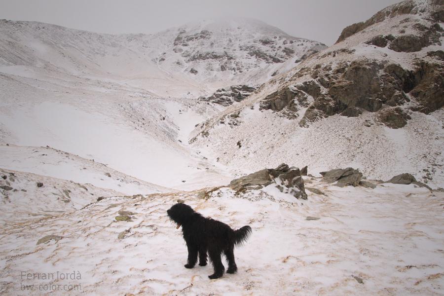Davant del Puigmal