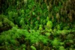 little green valley / la petita vall verda