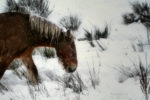 the mare in winter / l'euga a l'hivern