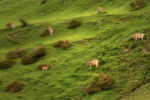 vertical pastures / les pastures verticals