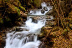 autumn pictures / imatges de tardor