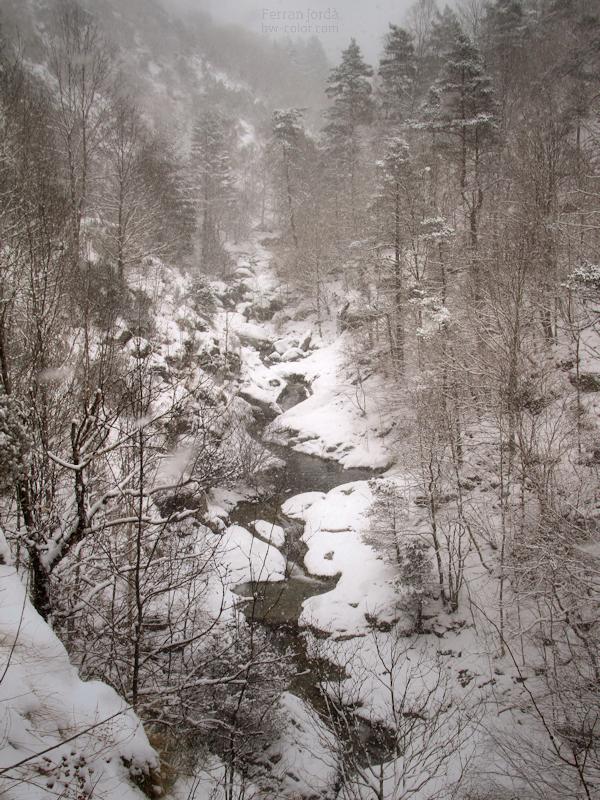 that little valley / aquella petita vall