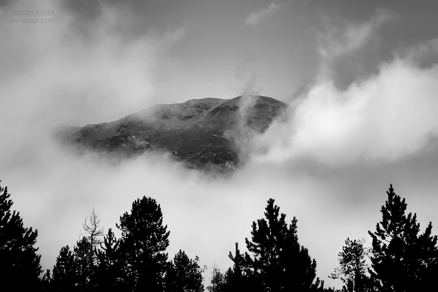 Bosc, núvols i darrera, la muntanya