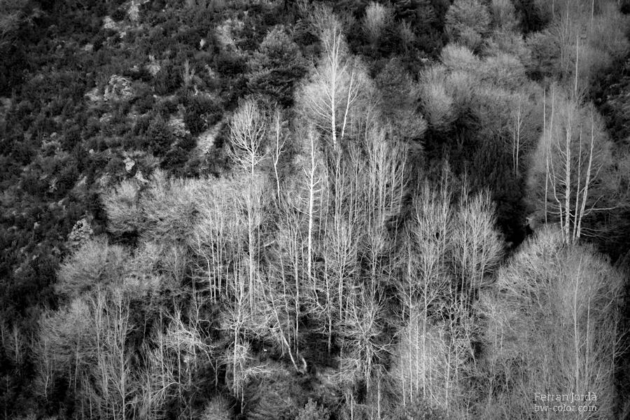 some trees in winter / alguns arbre a l'hivern
