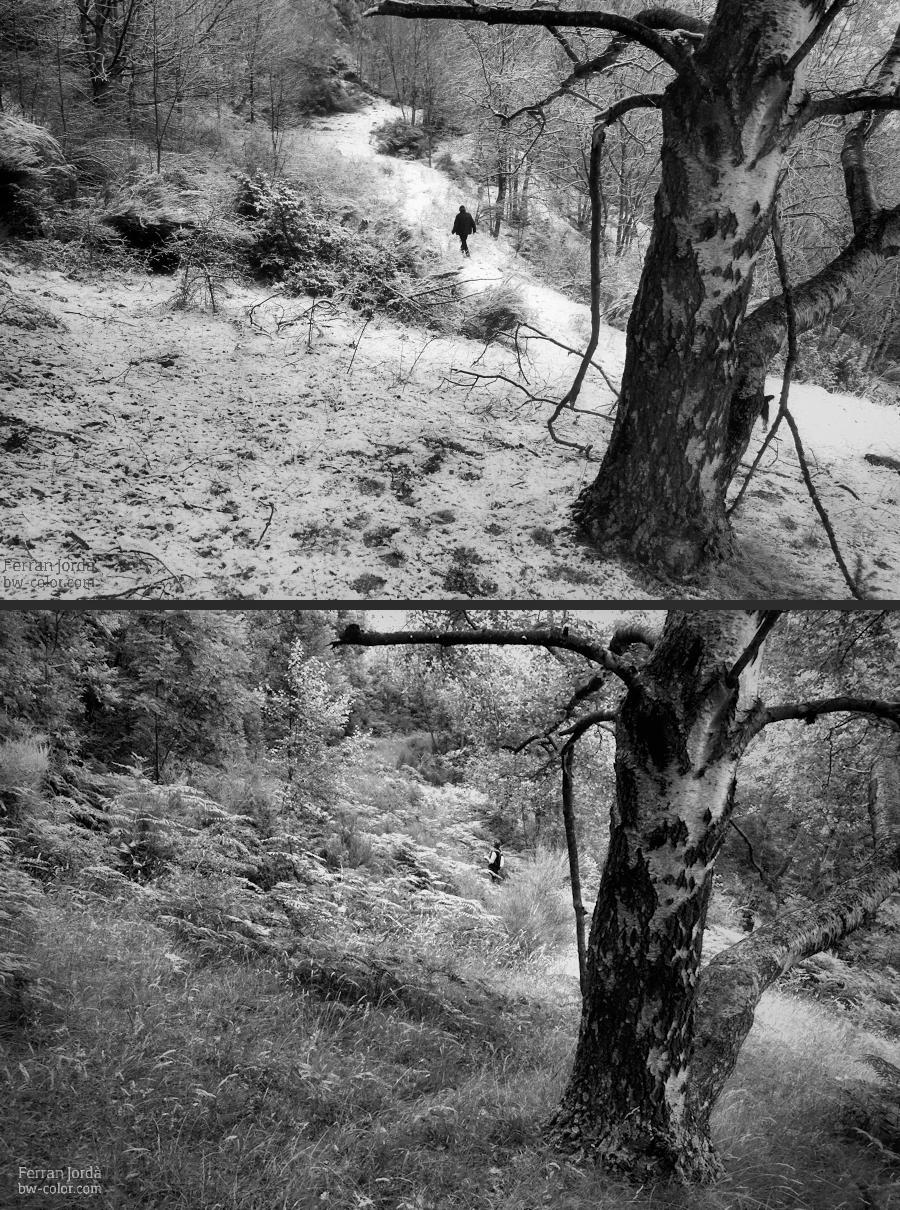 winter and summer / hivern i estiu