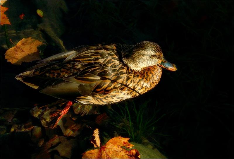 Composició de tardor / Autumn's composition / Composición de otoño